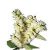 NEW DIRECTIONS AUSTRALIA沼泽茶树精油